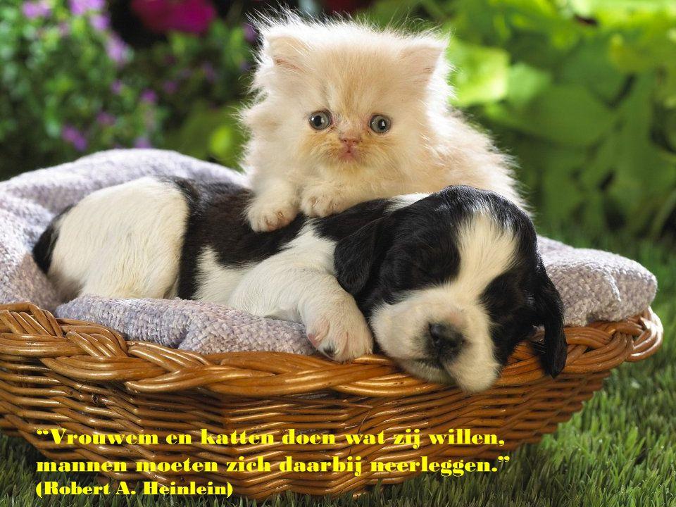 Vrouwem en katten doen wat zij willen, mannen moeten zich daarbij neerleggen. (Robert A. Heinlein)