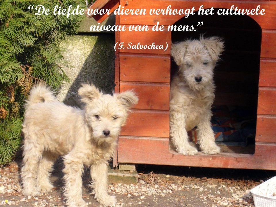 De liefde voor dieren verhoogt het culturele niveau van de mens.
