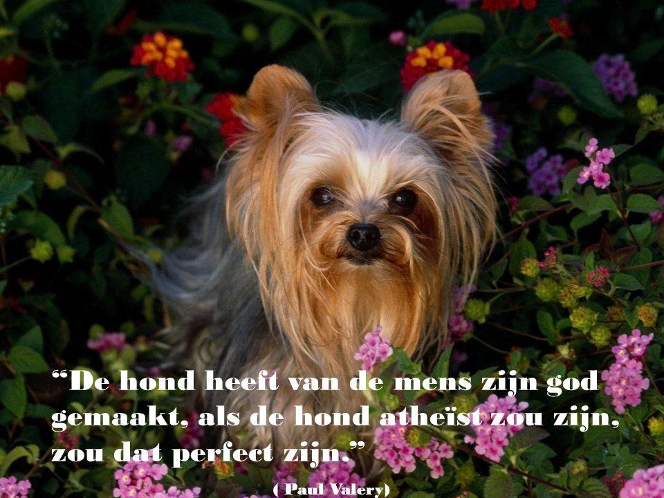 De hond heeft van de mens zijn god gemaakt, als de hond atheïst zou zijn, zou dat perfect zijn.