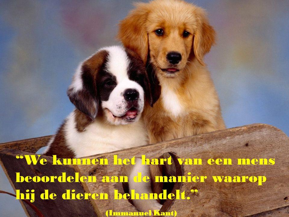 We kunnen het hart van een mens beoordelen aan de manier waarop hij de dieren behandelt.
