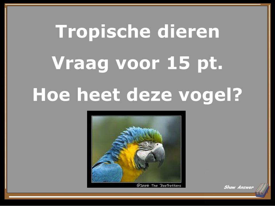 Tropische dieren Vraag voor 15 pt. Hoe heet deze vogel