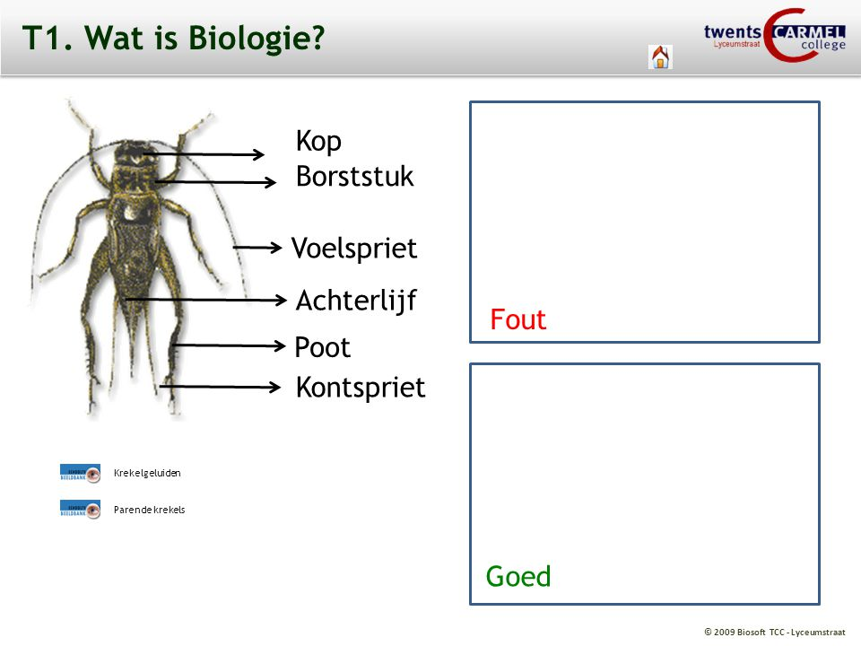 T1. Wat is Biologie Kop Borststuk Fout Voelspriet Achterlijf Fout