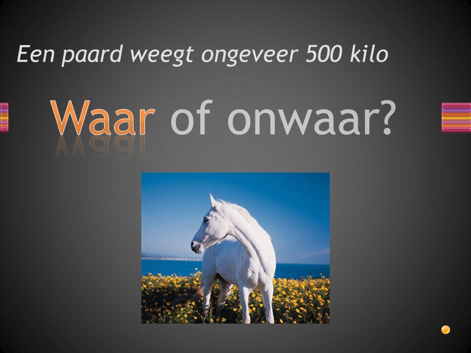 Een paard weegt ongeveer 500 kilo