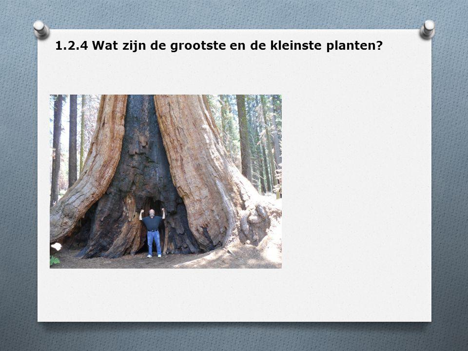 1.2.4 Wat zijn de grootste en de kleinste planten