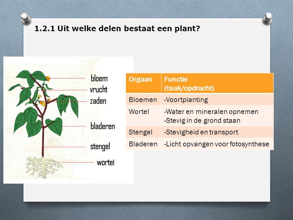 1.2.1 Uit welke delen bestaat een plant