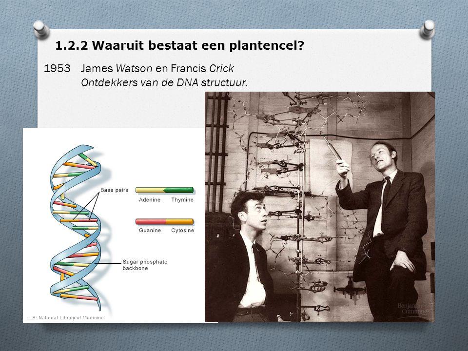 1.2.2 Waaruit bestaat een plantencel