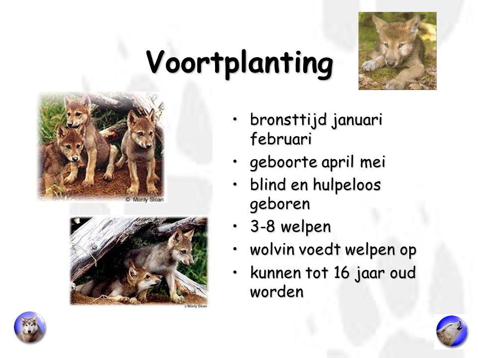 Voortplanting bronsttijd januari februari geboorte april mei