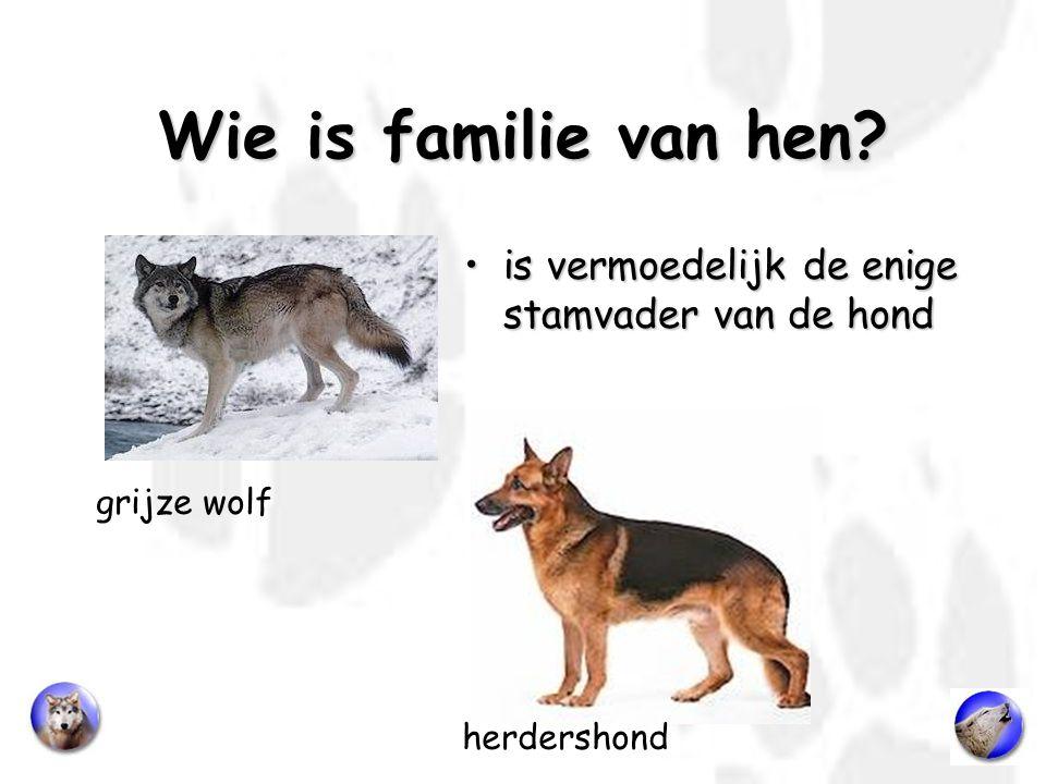 Wie is familie van hen is vermoedelijk de enige stamvader van de hond