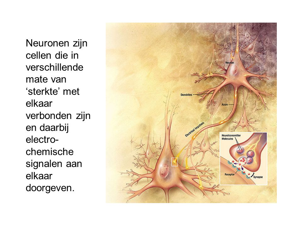 Neuronen zijn cellen die in verschillende mate van 'sterkte' met elkaar verbonden zijn en daarbij electro-chemische signalen aan elkaar doorgeven.