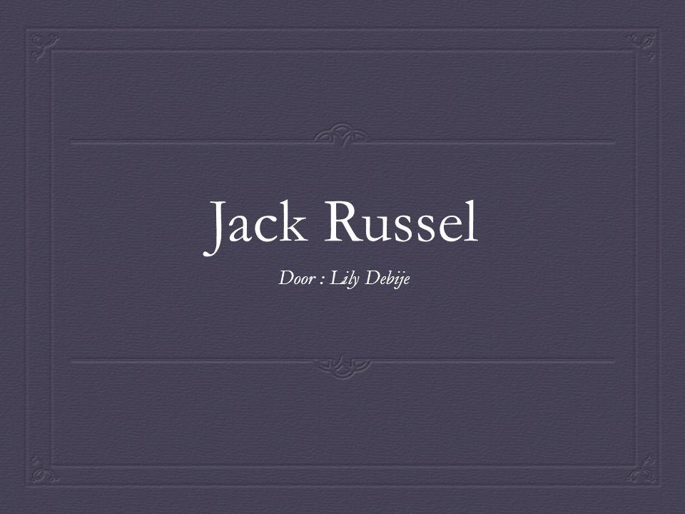 Jack Russel Door : Lily Debije