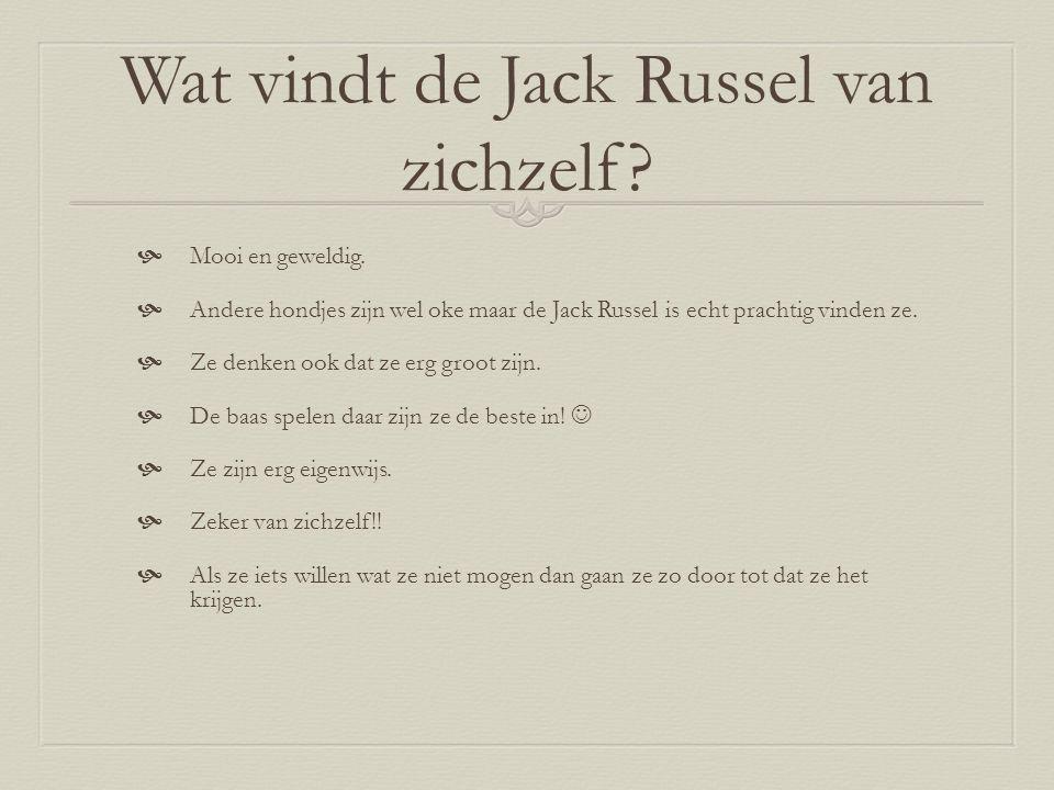 Wat vindt de Jack Russel van zichzelf