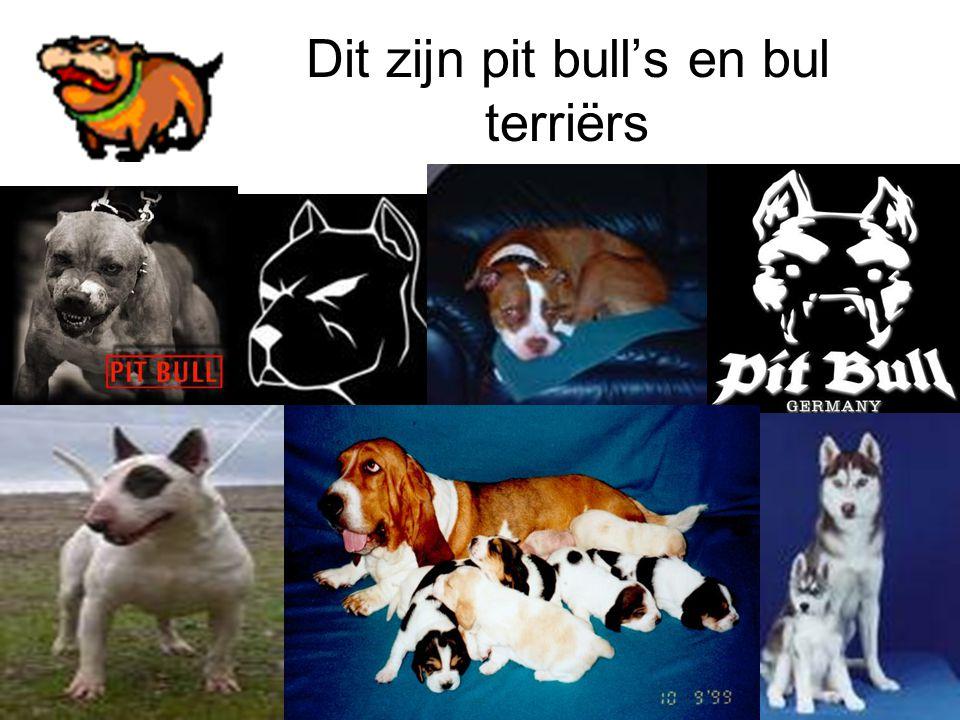 Dit zijn pit bull's en bul terriërs