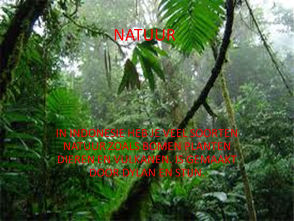 NATUUR IN INDONESIE HEB JE VEEL SOORTEN NATUUR ZOALS BOMEN PLANTEN DIEREN EN VULKANEN.