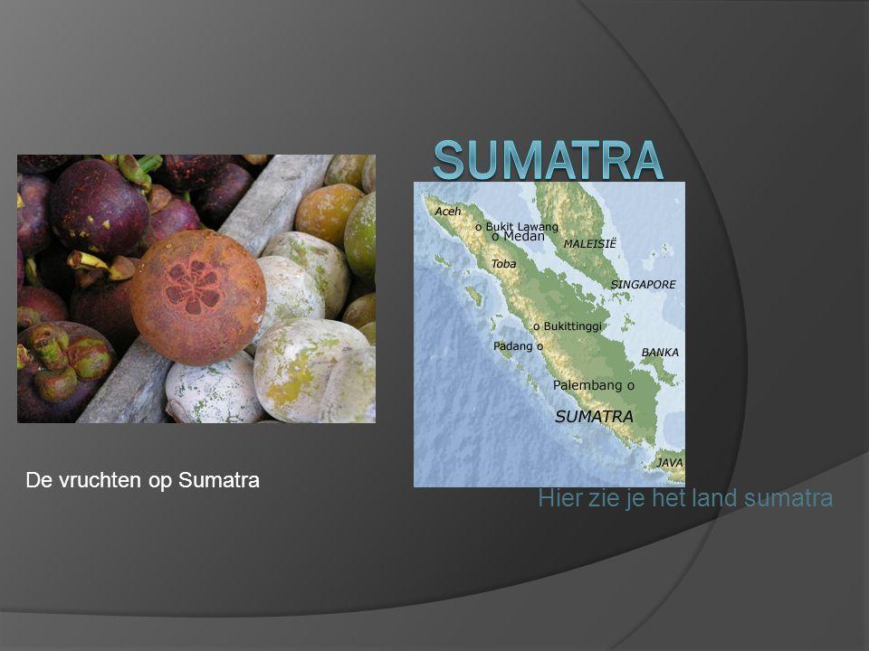 Hier zie je het land sumatra