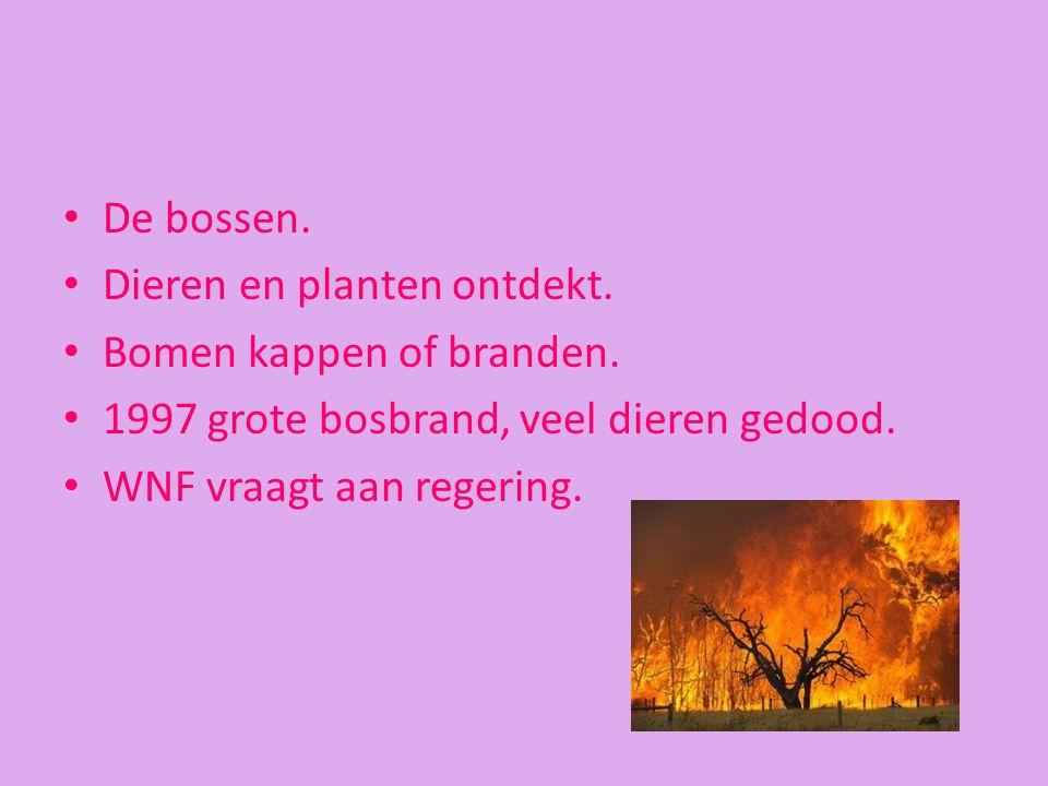 De bossen. Dieren en planten ontdekt. Bomen kappen of branden. 1997 grote bosbrand, veel dieren gedood.