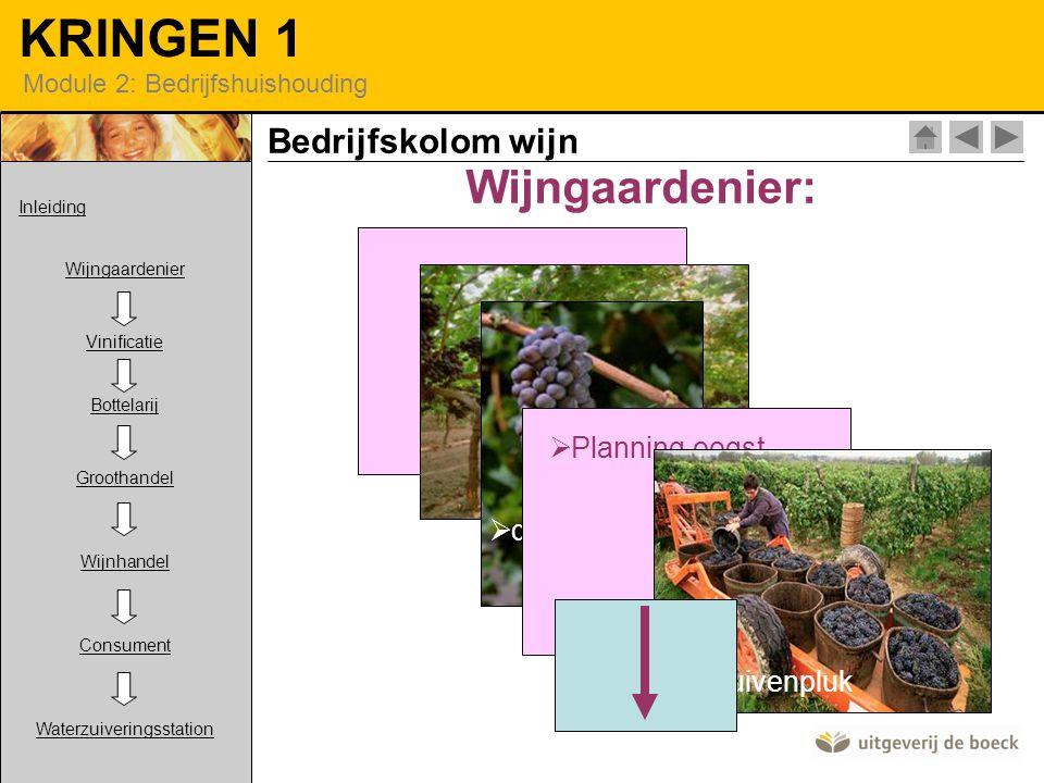 Wijngaardenier: Bedrijfskolom wijn snoeien Planning oogst druiven