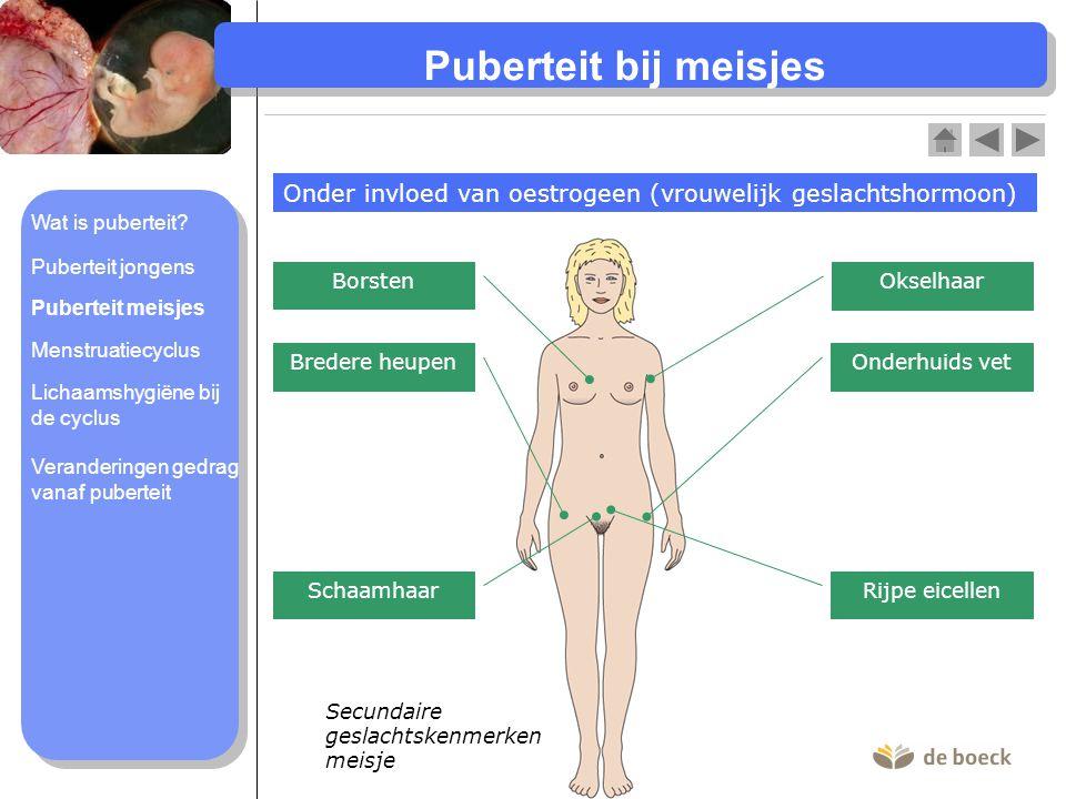 Puberteit bij meisjes Onder invloed van oestrogeen (vrouwelijk geslachtshormoon) Wat is puberteit