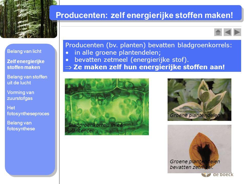 Producenten: zelf energierijke stoffen maken!