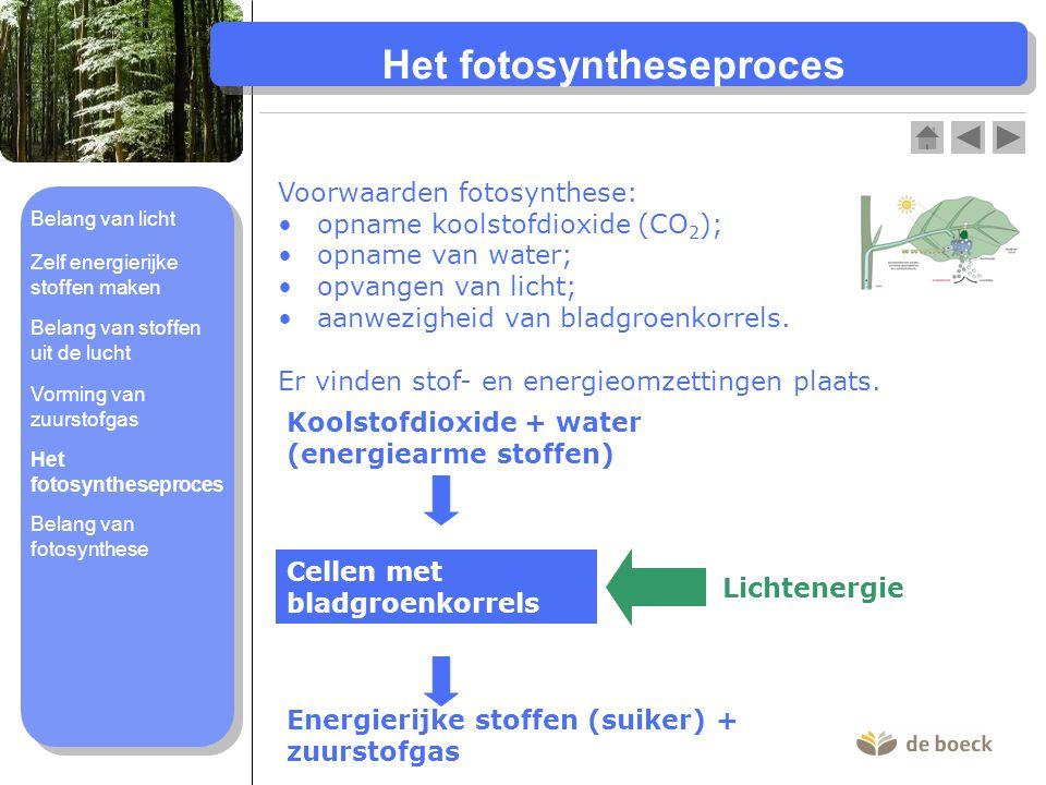 Het fotosyntheseproces