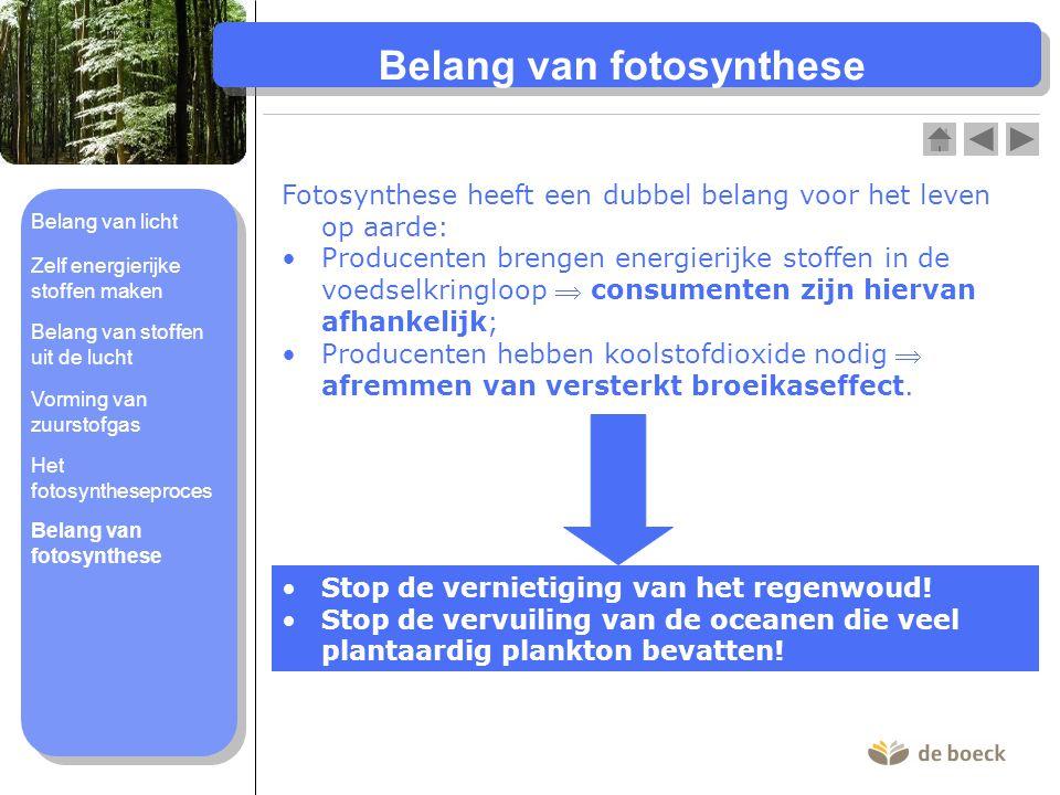 Belang van fotosynthese