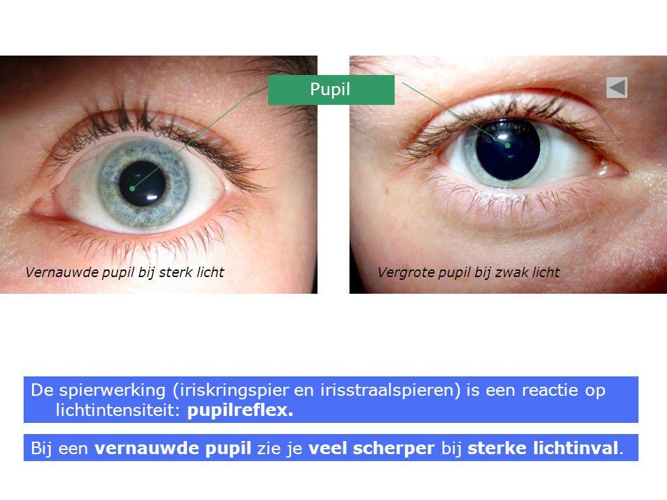 Bij een vernauwde pupil zie je veel scherper bij sterke lichtinval.