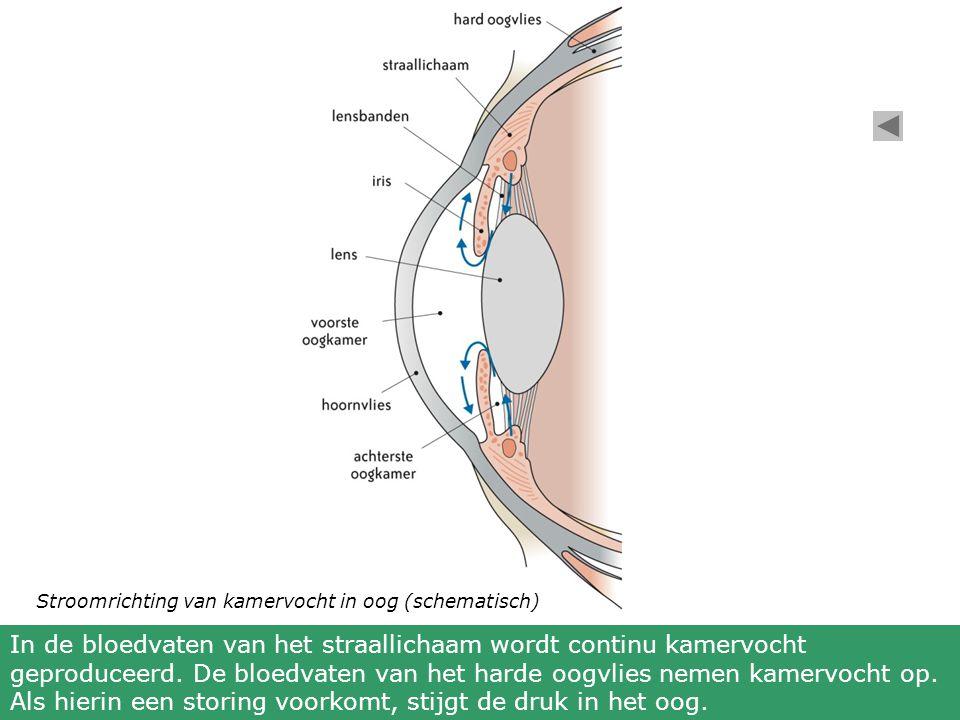 Stroomrichting van kamervocht in oog (schematisch)