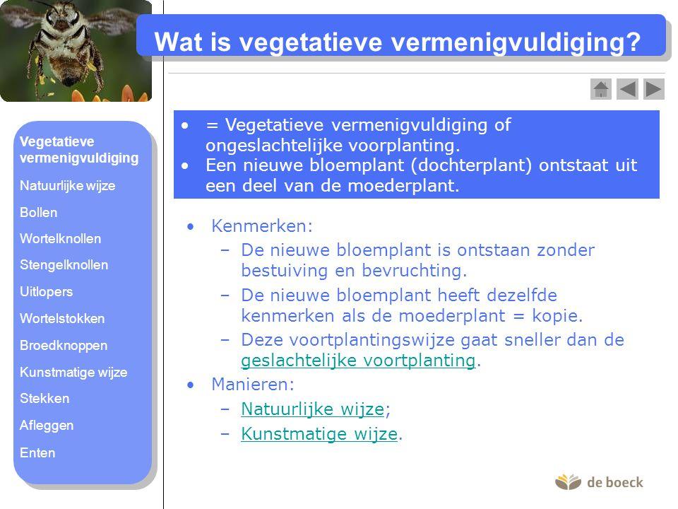 Wat is vegetatieve vermenigvuldiging