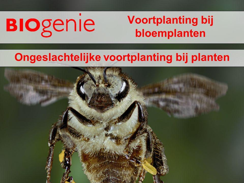 Voortplanting bij bloemplanten
