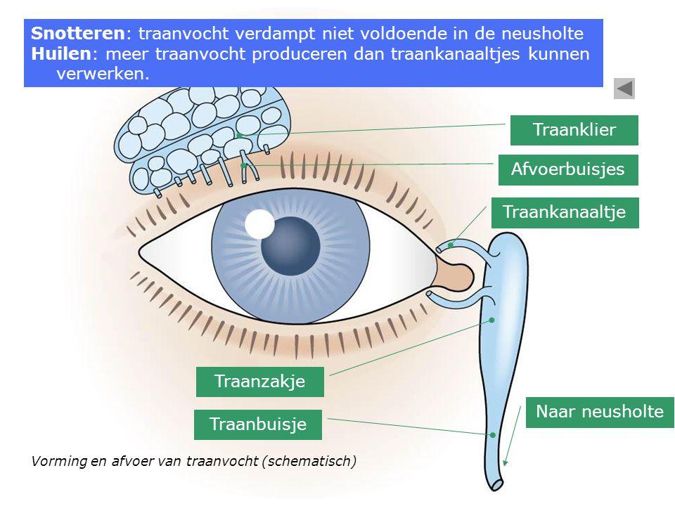 Snotteren: traanvocht verdampt niet voldoende in de neusholte