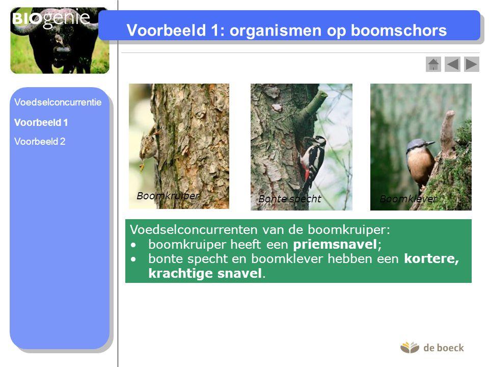 Voorbeeld 1: organismen op boomschors