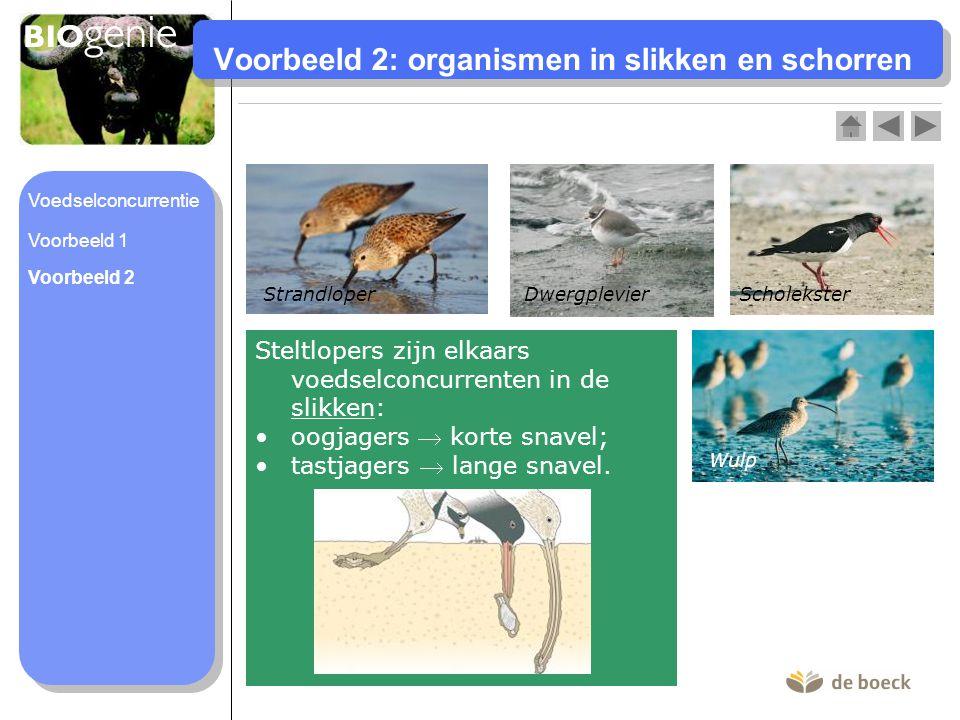 Voorbeeld 2: organismen in slikken en schorren