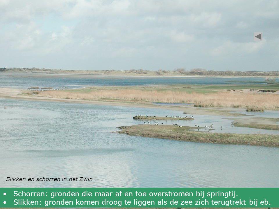 Schorren: gronden die maar af en toe overstromen bij springtij.
