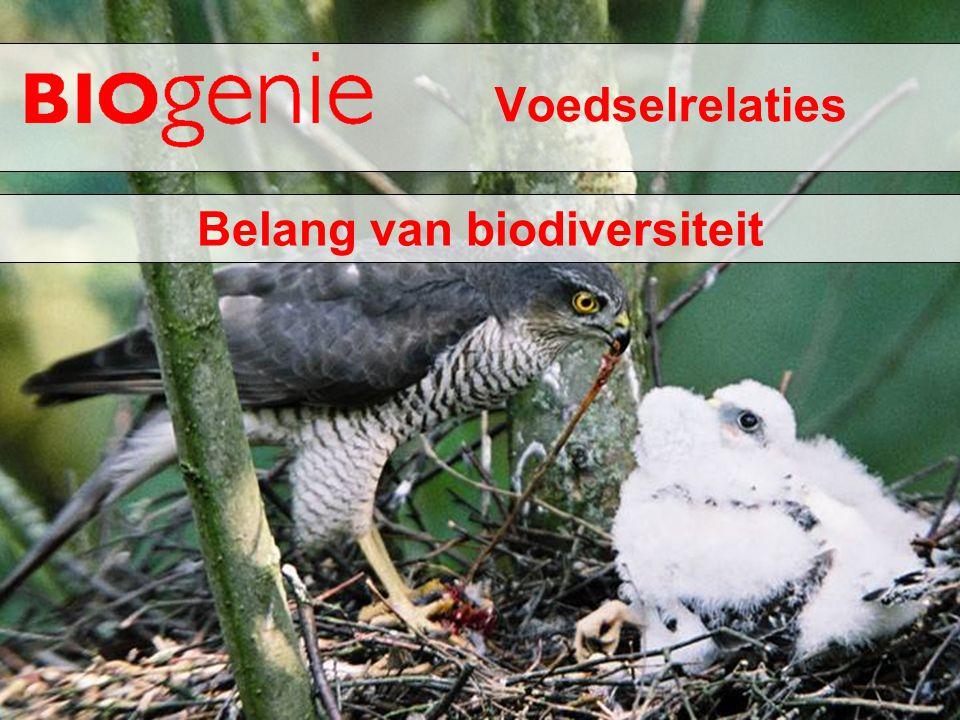 Belang van biodiversiteit