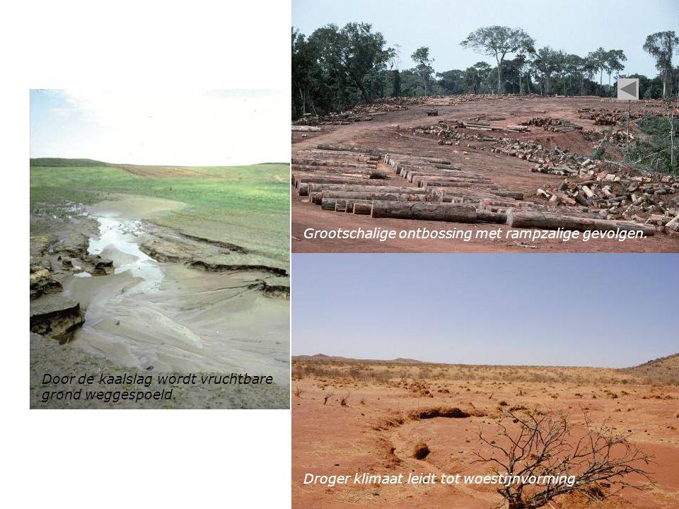 Grootschalige ontbossing met rampzalige gevolgen.