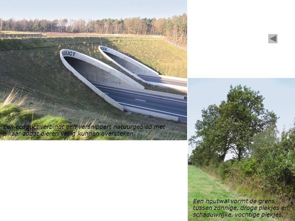 Een ecoduct verbindt een versnippert natuurgebied met elkaar zodat dieren veilig kunnen oversteken.