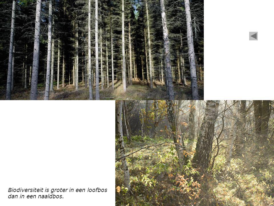 Biodiversiteit is groter in een loofbos dan in een naaldbos.