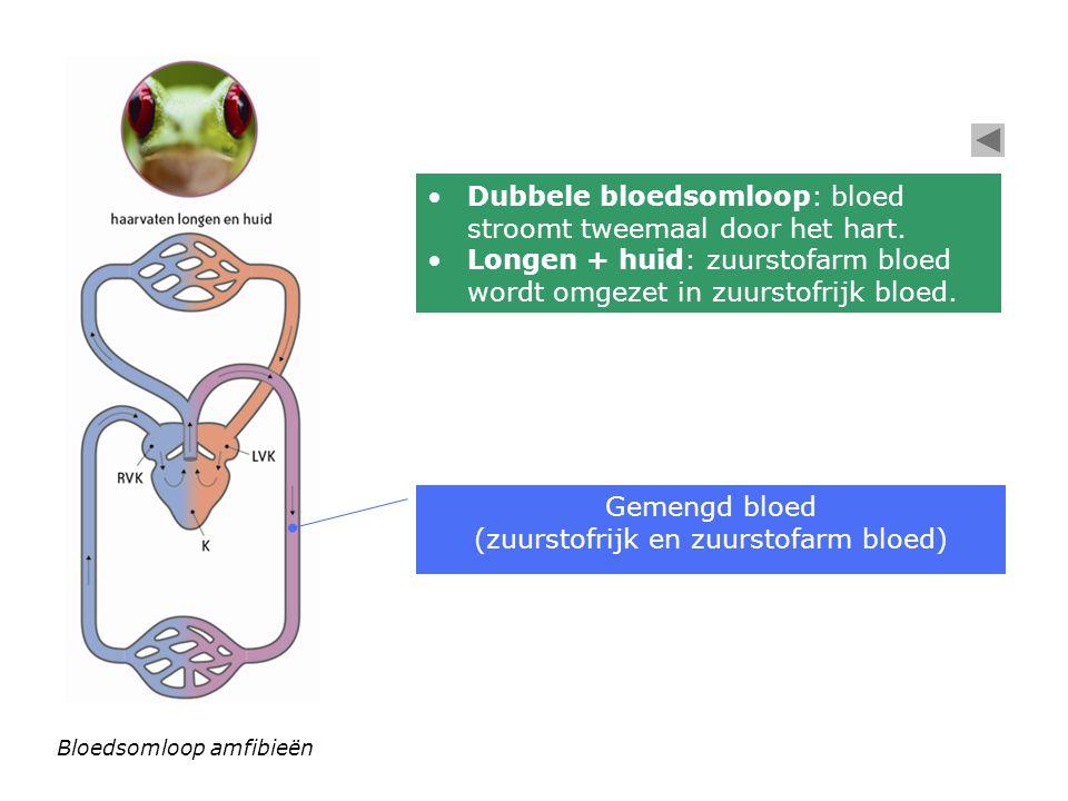 (zuurstofrijk en zuurstofarm bloed)