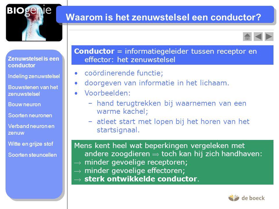 Waarom is het zenuwstelsel een conductor