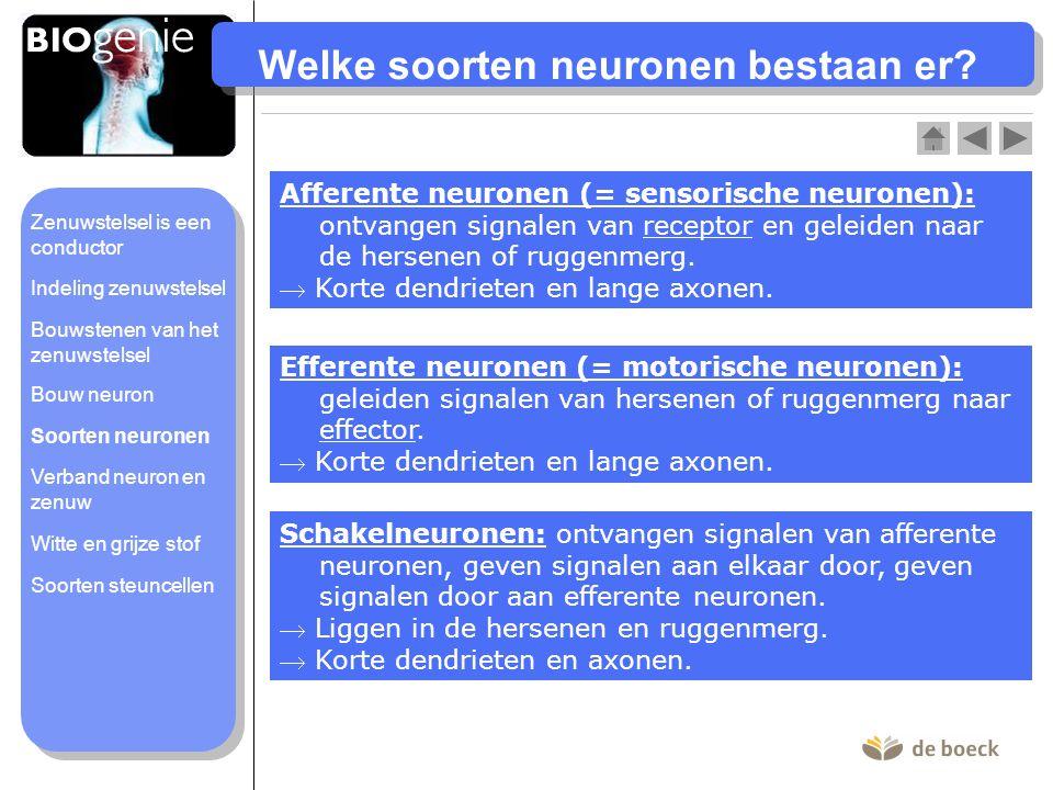 Welke soorten neuronen bestaan er