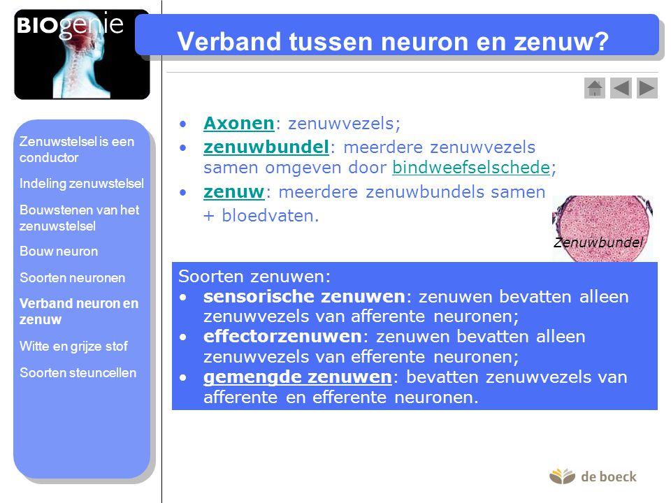 Verband tussen neuron en zenuw