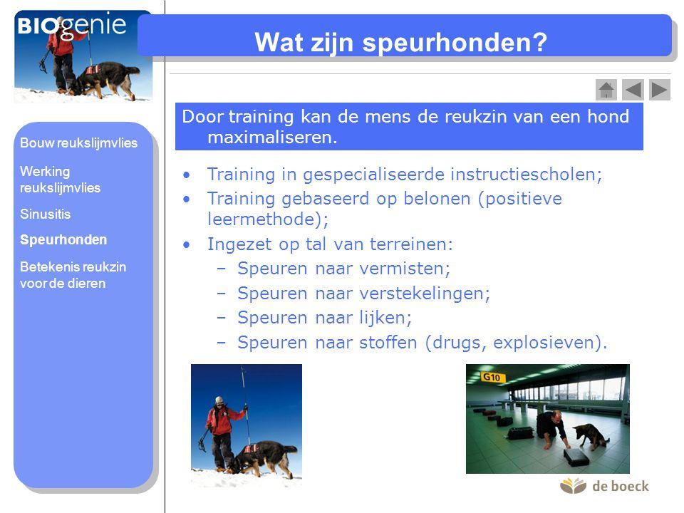 Wat zijn speurhonden Door training kan de mens de reukzin van een hond maximaliseren. Bouw reukslijmvlies.