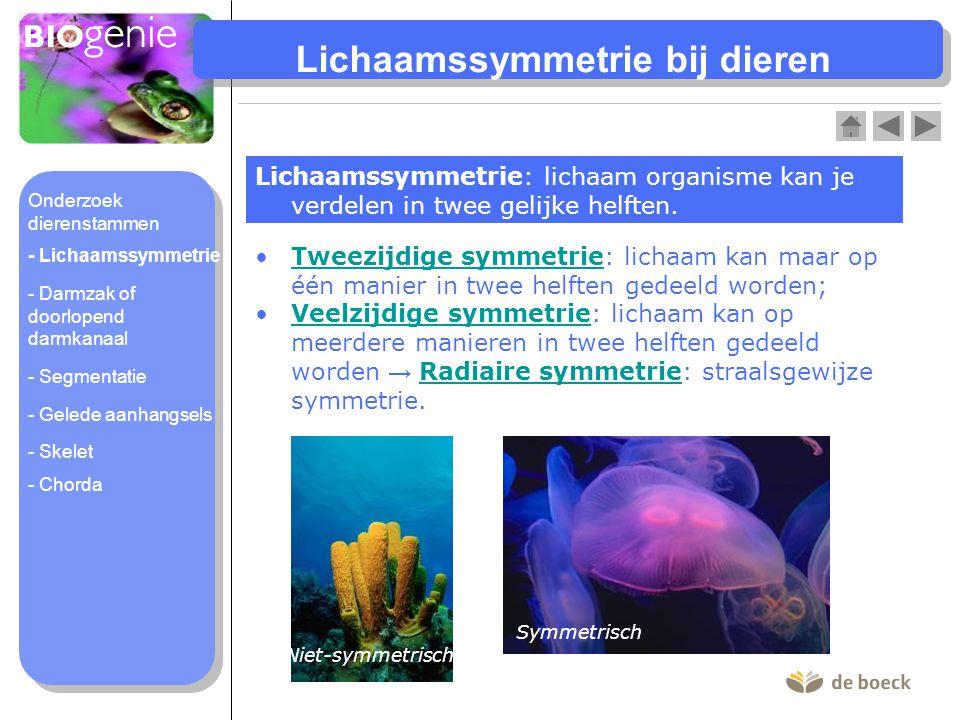 Lichaamssymmetrie bij dieren