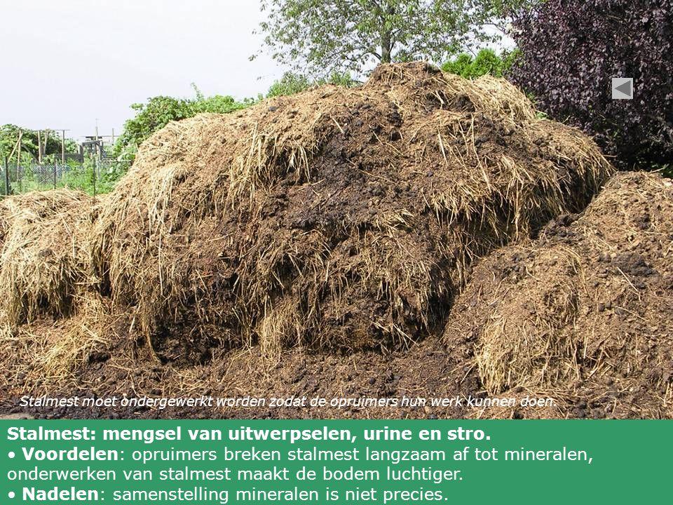 Stalmest: mengsel van uitwerpselen, urine en stro.