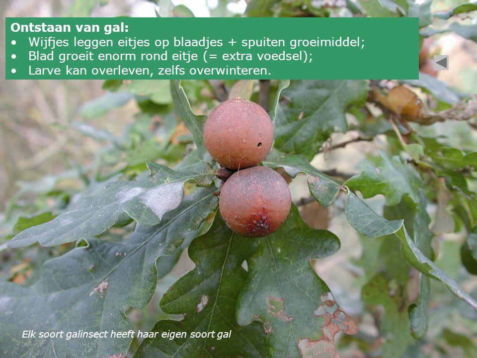 Wijfjes leggen eitjes op blaadjes + spuiten groeimiddel;