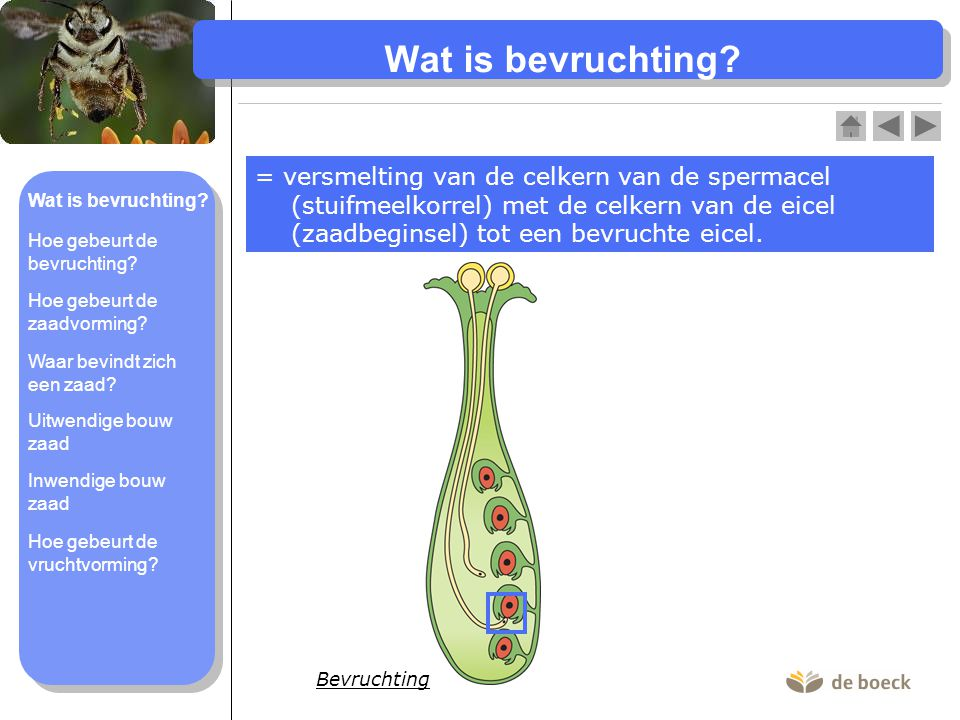 Wat is bevruchting