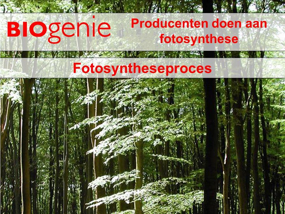 Producenten doen aan fotosynthese