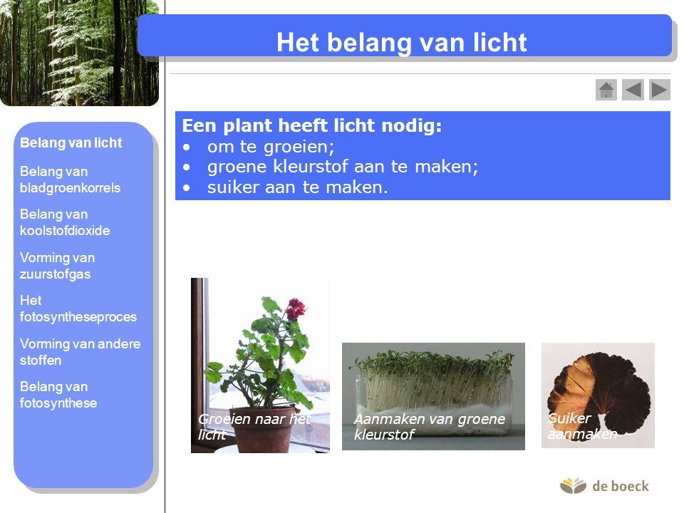 Het belang van licht Een plant heeft licht nodig: om te groeien;