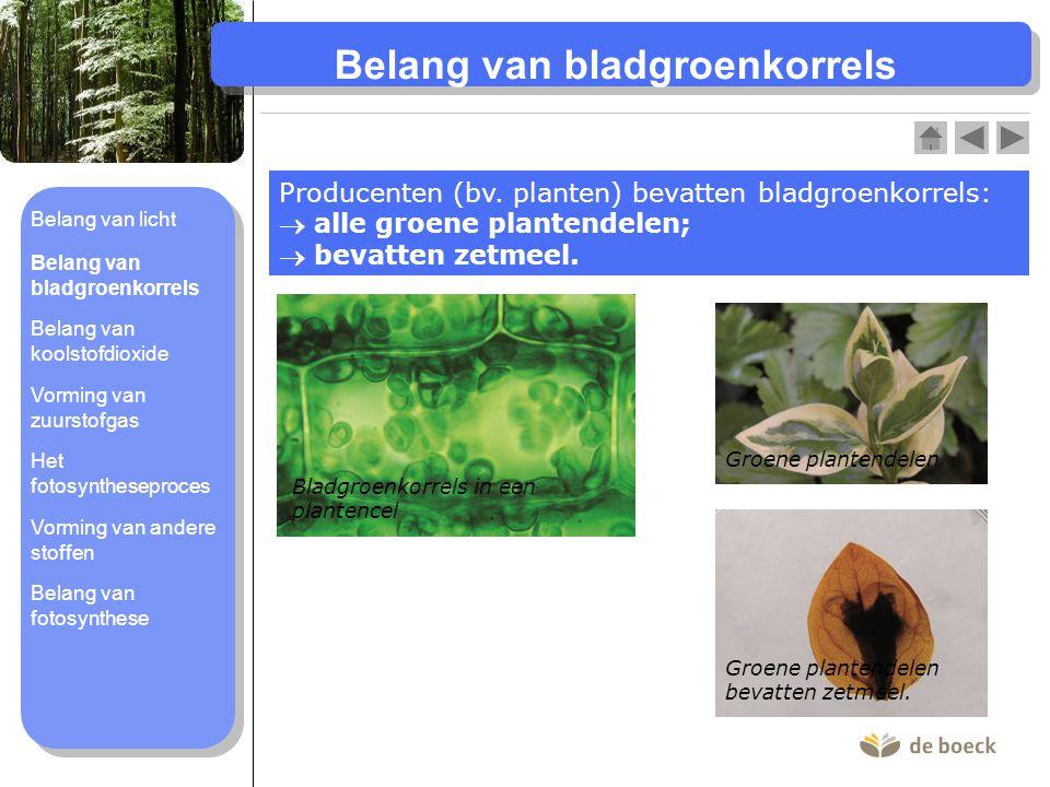 Belang van bladgroenkorrels