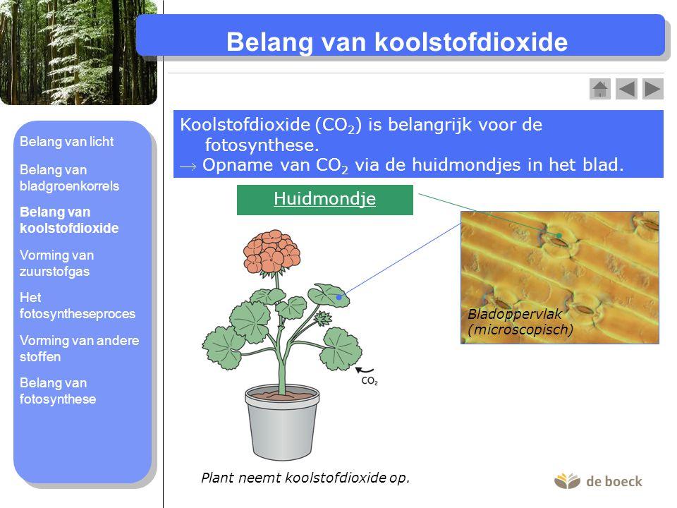 Belang van koolstofdioxide
