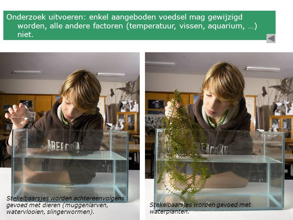 Onderzoek uitvoeren: enkel aangeboden voedsel mag gewijzigd worden, alle andere factoren (temperatuur, vissen, aquarium, …) niet.